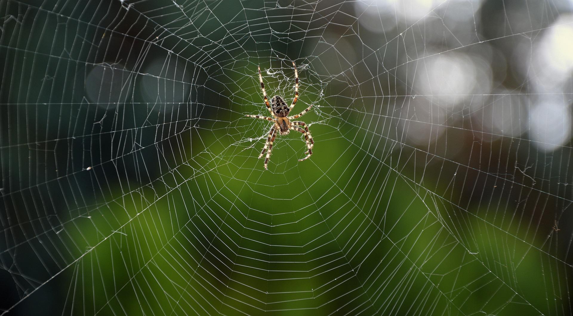 Koli Spider in Marathi कोळी किटकांविषयी मनोरंजक तथ्य